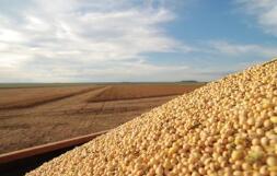 农业农村部:预测2019/2020年度大豆进口8768万吨 调增148万吨